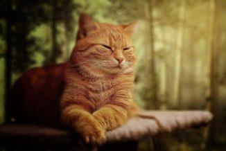 atelier yoga en ligne avec zoom - atelier yoga gestion emotions et stress