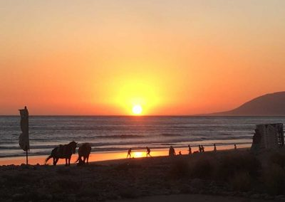 stage-yoga-maroc-COUCHER-SOLEIL-TAGHAZhout