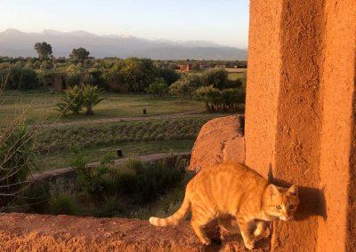 stage-yoga-marrakech-chat-au-soleil-2