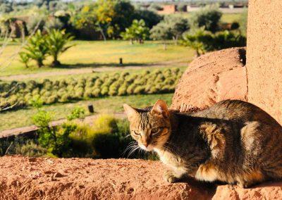stage-yoga-marrakech-chat-au-soleil